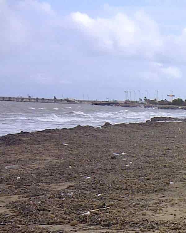 Strand mit Seegras