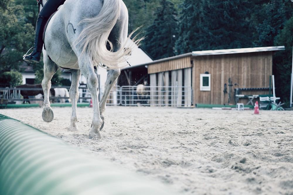 Zitat mit Pferd auf Sandreitplatz Hintergrund