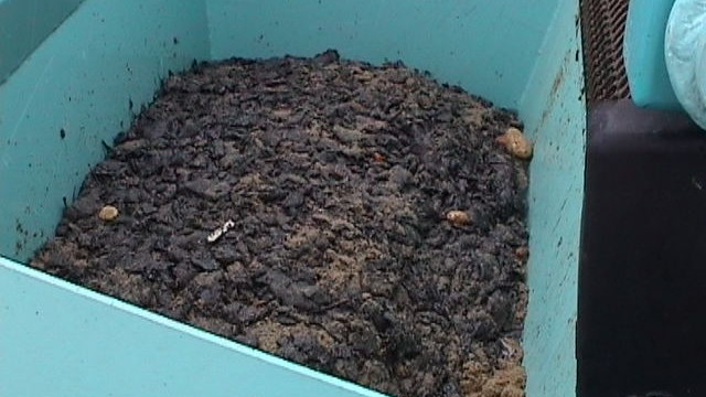 Collection container with oil clumps